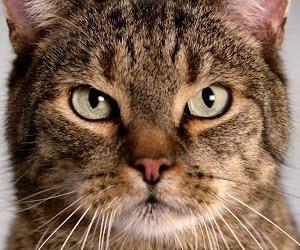 Mercedes-Benz CLA: Cat