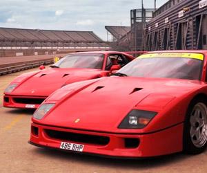 Ferrari F40: Analog Animal