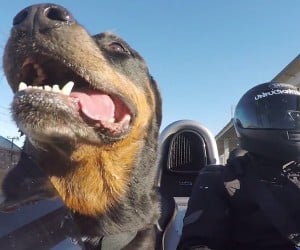 Dogs Love the Ariel Atom