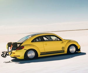 World's Fastest Beetle Does 205 mph
